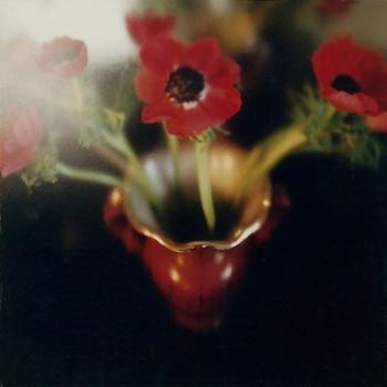 scan-bloem
