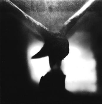 scan-vogel-4